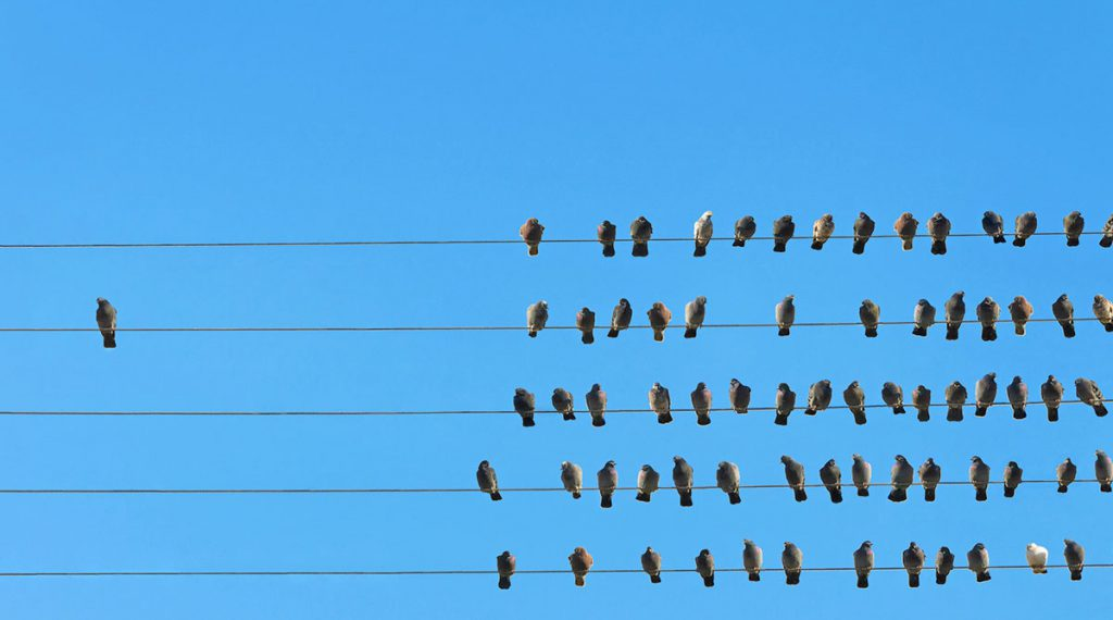 one bird by itself on a powerline away from a large group of birds sitting together